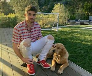 boy, dog, and singer image