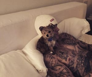 justin bieber, dog, and cute image