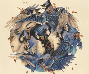 bird, illustration, and teagan white image