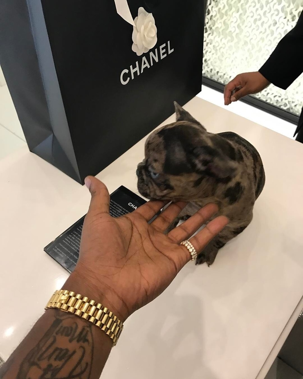 chanel and dog image