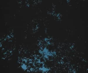 nature, night, and trees image