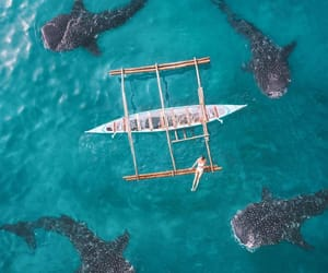aerial photography, boat, and nature image