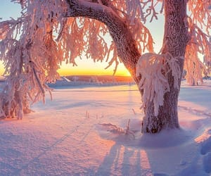 nature, photography, and winter image