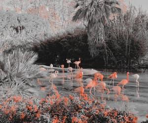 background, kpop, and lake image