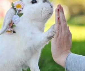 rabbit, bunny, and flowers image