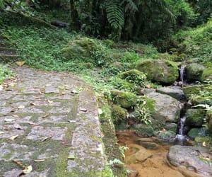 brasil, natureza, and green image