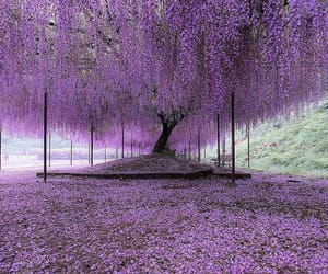 purple, tree, and nature image