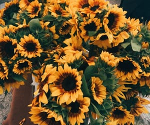 sunflower, aesthetic, and flowers image