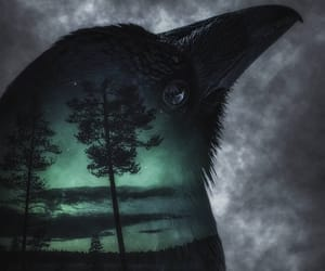 aurora borealis, bird, and raven image
