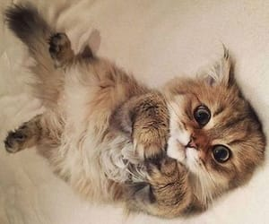 adorable, cat, and cats image