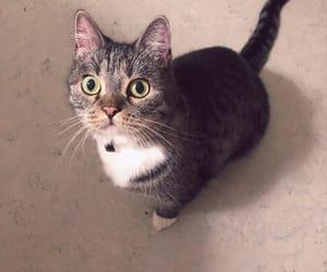 animals, cat, and disney image