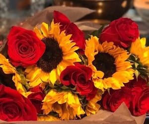 flowers, rose, and sunflower image