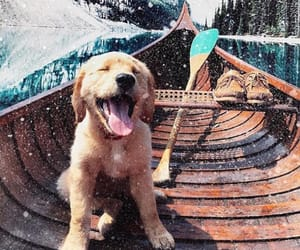 dog, boat, and puppy image