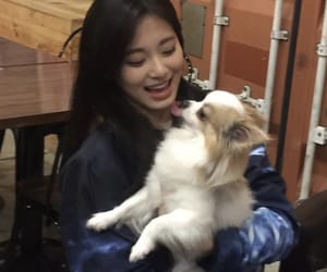 aesthetic, asian, and dog image