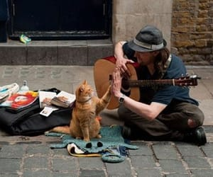 cat, guitar, and music image