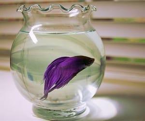 fish, purple, and animal image