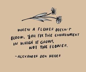 quotes, flowers, and empowerment image