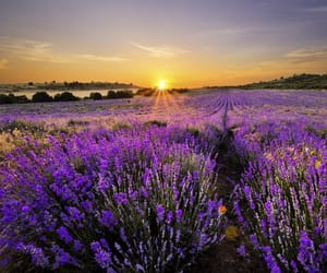 bulgaria, sunset, and flowers image
