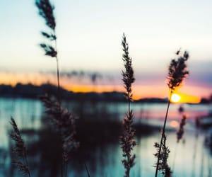 lake, sunset, and water image