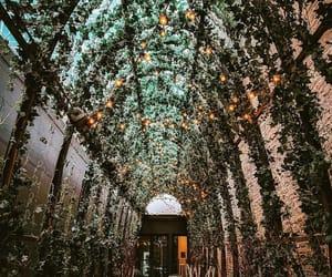 botanic, cafe, and ivy image