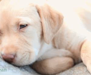 gif and puppy image