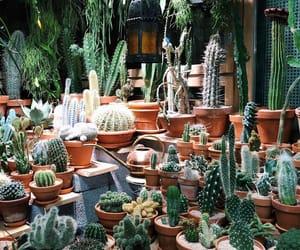 aesthetic, aesthetics, and cacti image