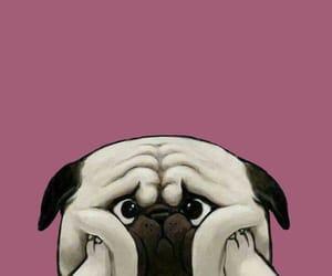 dog and wallpaper image