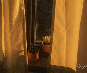 cactus, plants, and golden image