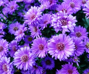 purple and flowers image