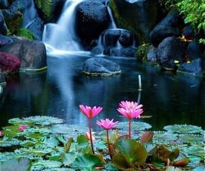 flowers, waterfall, and nature image
