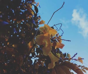 autumn, blue, and flowers image
