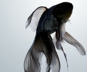fish, black, and animal image