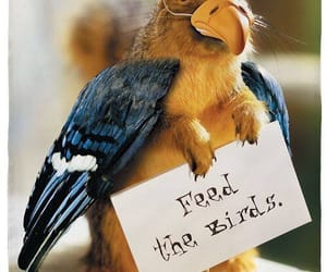 bird, quote, and funny image