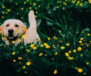 dog, garden, and grass image