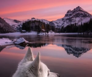 animals, dogs, and landscape image