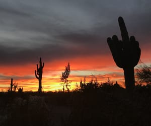 adventure, cactus, and sunset image