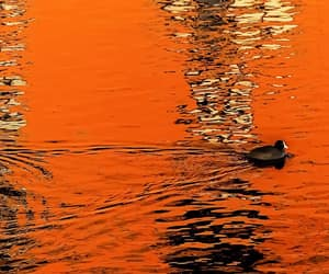 orange and water image