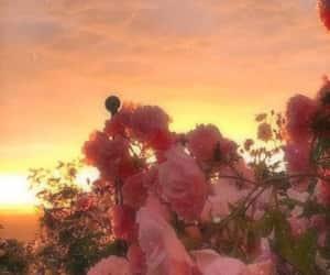 article, dandelion, and sakura image