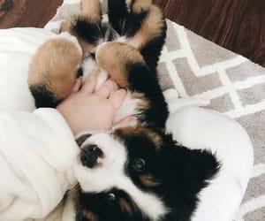 adorable, dog, and paws image