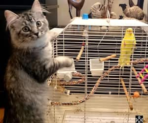 animal, bird, and cute cats image