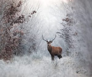 deer, winter, and snow image