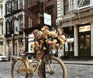 city, bicycle, and flowers image