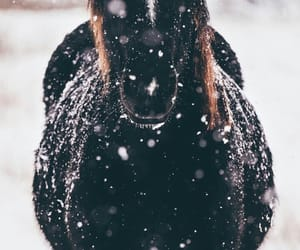snow, horse, and wallpaper image