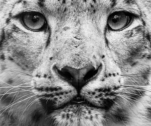 animal, black and white, and eyes image