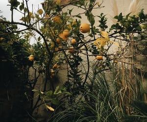 70, citrus, and lemon image