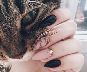 cat, nails, and animal image