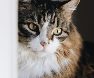 animal, kitten, and kitty image