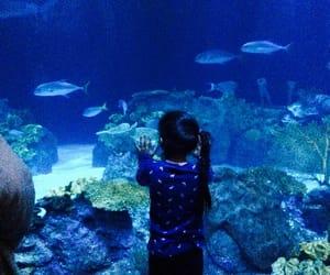 blue, shedd aquarium, and marinelife image