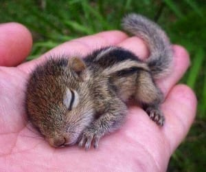 adorable, beautiful, and life image