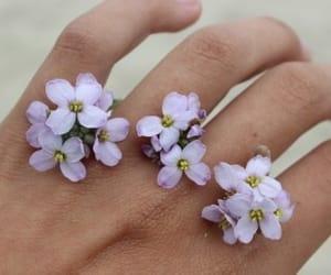 flowers, hand, and purple image